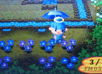 雨の日の花壇
