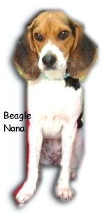 Puppy Nana