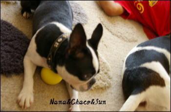 ナナ&チャコ&Sun