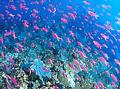 diving_cabilao_ph03.jpg