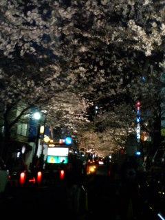 八重洲の桜・・・・・