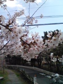 桜アップっ!!