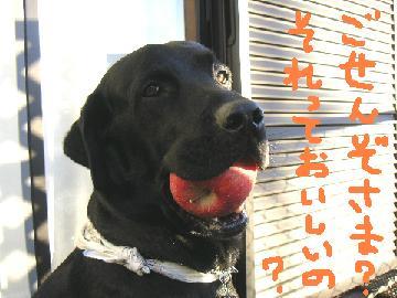 20061020-1.jpg