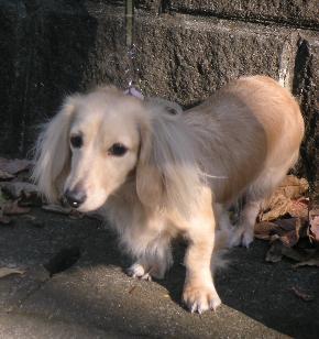 20061208-02.jpg