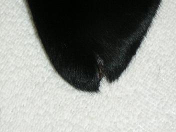 20070313-6.jpg