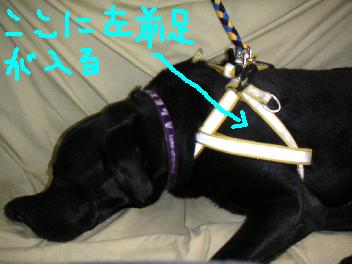 20070319-9.jpg