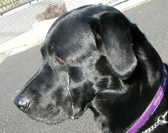 20070503-2.jpg
