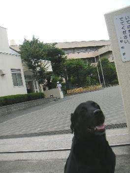 20070609-03.jpg
