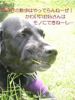 20070929-01.jpg