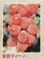 20071005-02.jpg