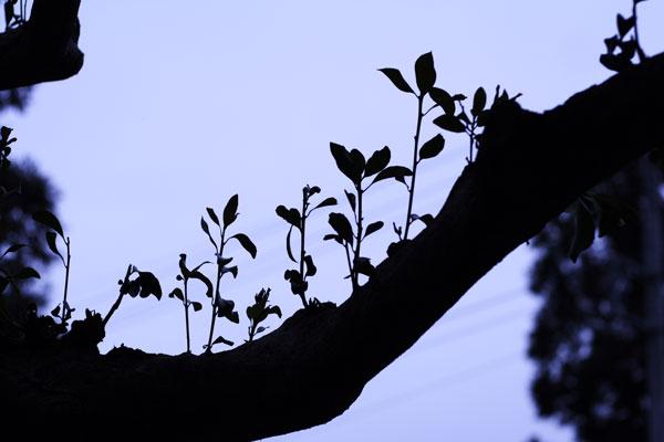 寂しい冬の木々