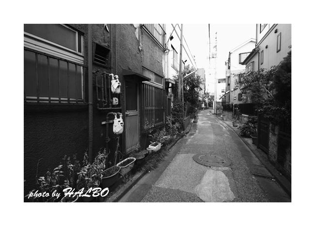IMG_8397_1022mweb.jpg