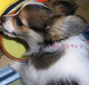 小太郎の耳ん中