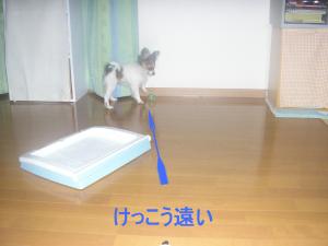 2006215-3.jpg