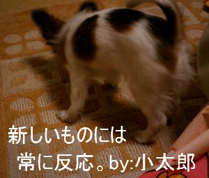 200632-1.jpg