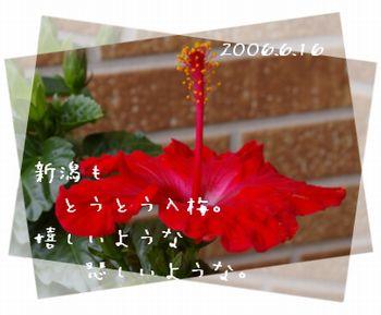 2006616-4.jpg