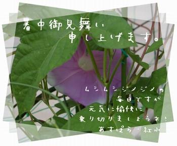 2006711-2.jpg