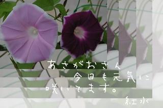 2006718-2.jpg