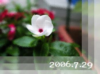 2006729-2.jpg