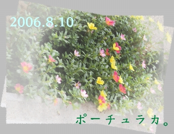 2006810-0.jpg