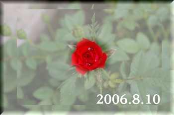2006810-1.jpg