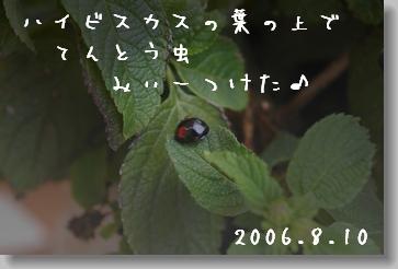 2006810-2.jpg