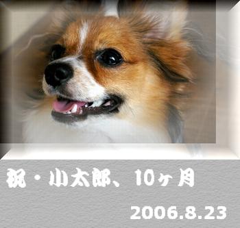 2006823-0.jpg