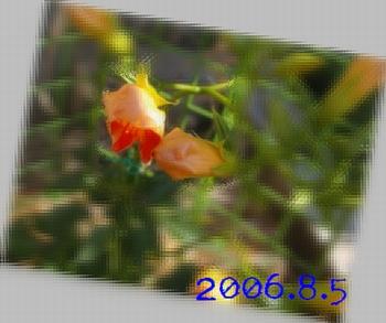 200685-0.jpg
