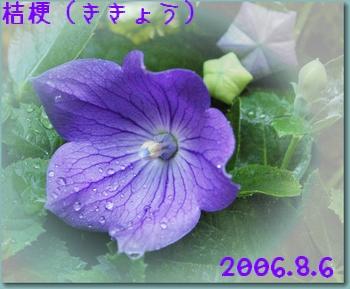 200686-1.jpg