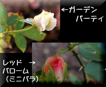 200696-0.jpg