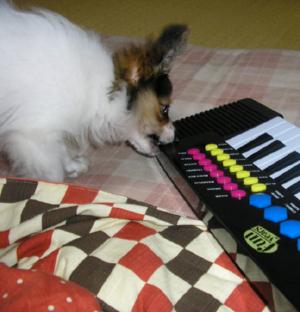 ピアノ小太郎