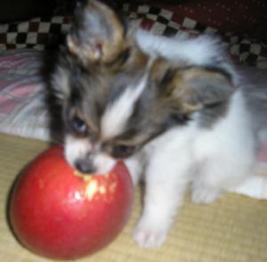 りんごと格闘