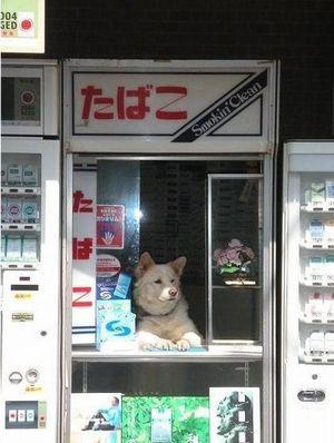犬+タバコ屋