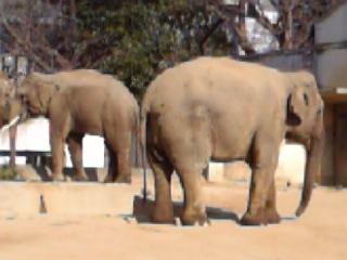 象さん!!