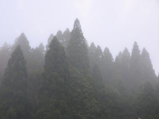 霧の周辺風景
