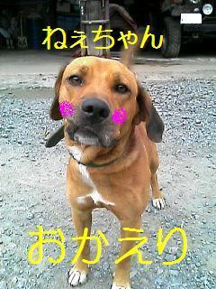 ごんちゃん