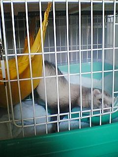 武蔵の寝相3