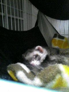 よく寝てるね・・・