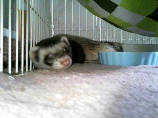 暑い時は下で寝ます