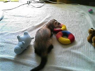 おもちゃがいっぱいだぁ~♪
