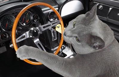 あかね運転