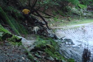 キャンプ 犬越路