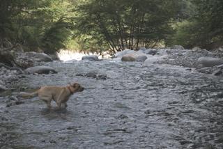 西丹沢 川 キャンプ