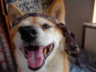 犬ブログコミュ