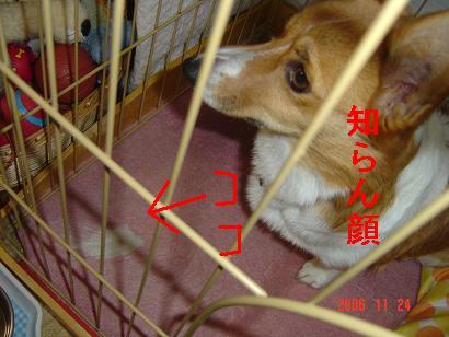 20061124201630.jpg