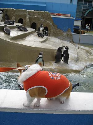 ペンギンとプー10.5