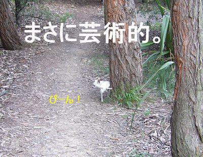 20061009104701.jpg