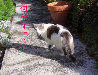s-P1120103.jpg