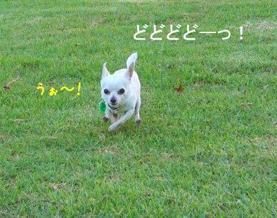 s-P1120757.jpg