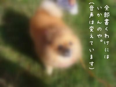 s-P1130608.jpg